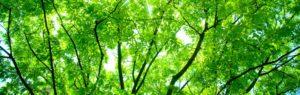 Brisbane Arborist Guide