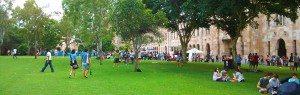 Brisbane Tree Services - School Playground