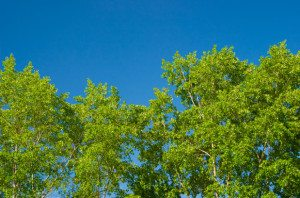 If you have a tree that needs to be removed, call Arbor Operations Brisbane