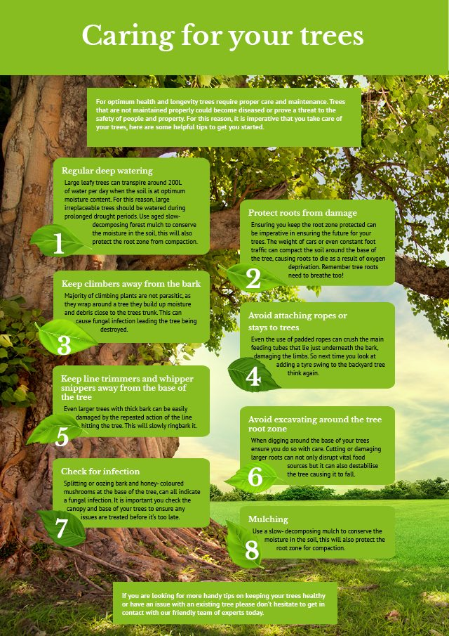 Tree Care Infographic